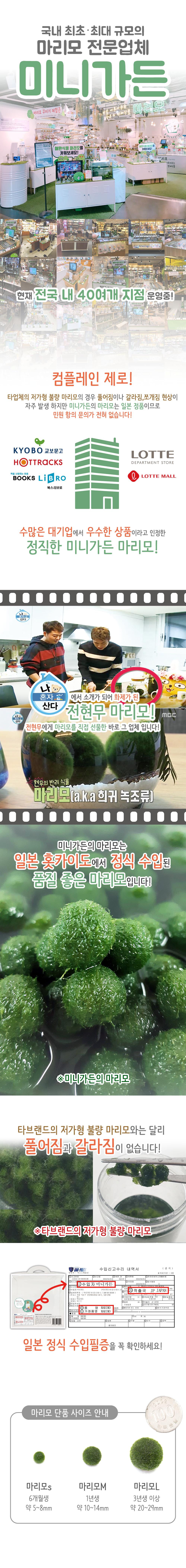 마리모 단품 - 미니가든, 4,000원, 키우기, 식물