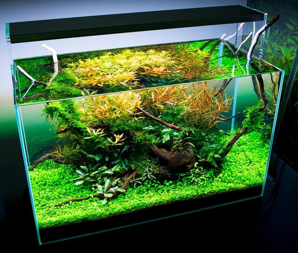 twinstar aquarium led light 600e 600es 60cm full spectrum. Black Bedroom Furniture Sets. Home Design Ideas
