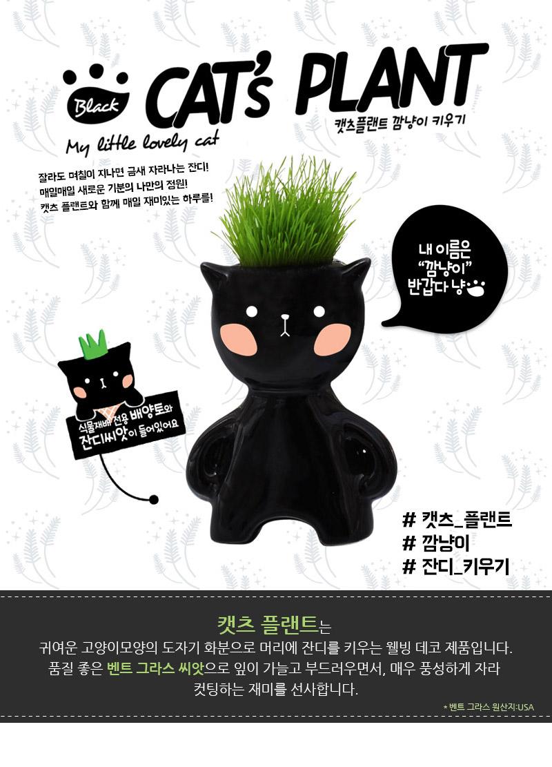 캣츠 플랜트-깜냥이 - 꿈쟁이플라워캔, 5,000원, 새싹/모종키우기, 새싹 키우기