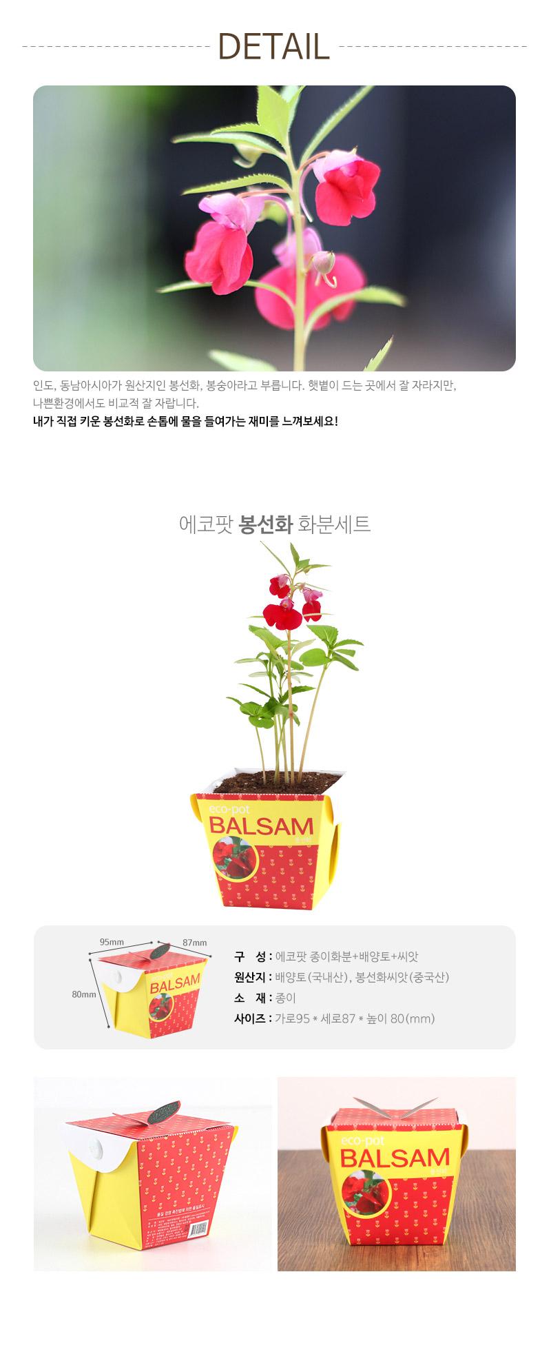 에코팟-봉선화 - 꿈쟁이플라워캔, 3,000원, 새싹/모종키우기, 새싹 키우기