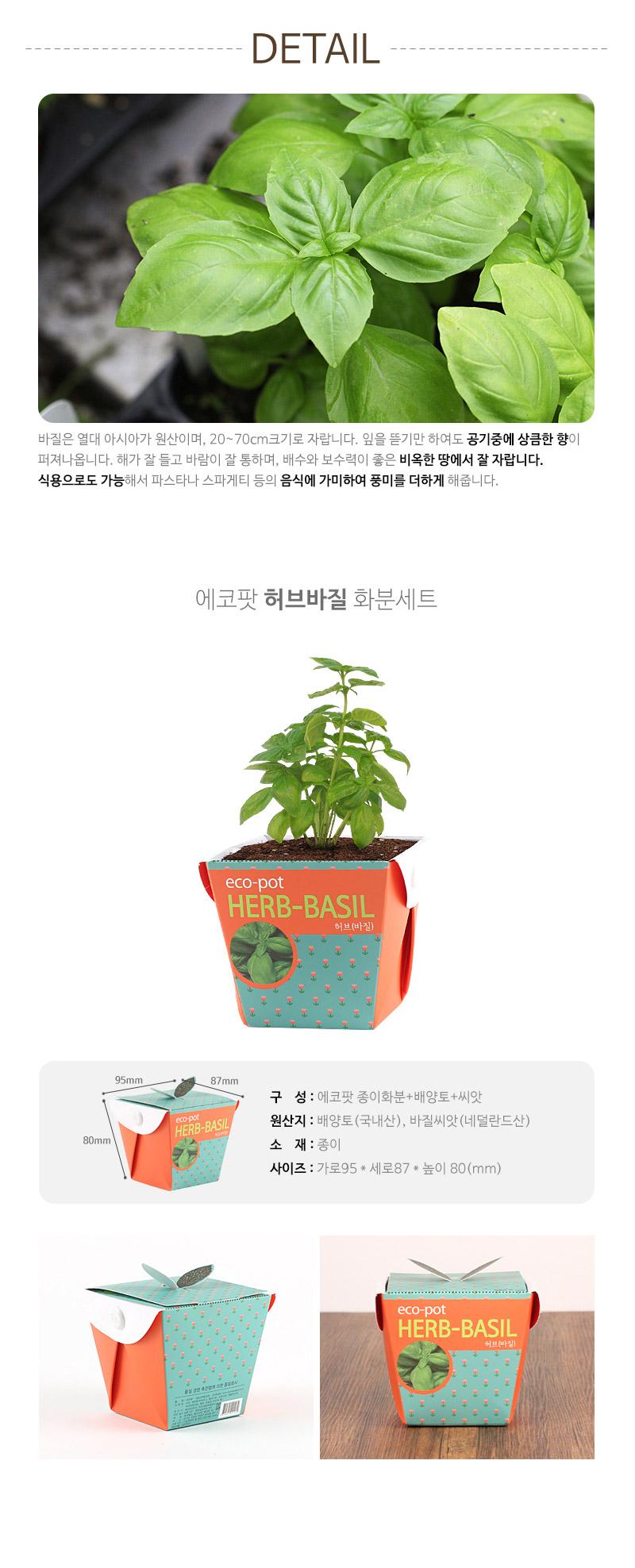 에코팟-허브(바질) - 꿈쟁이플라워캔, 3,000원, 새싹/모종키우기, 새싹 키우기