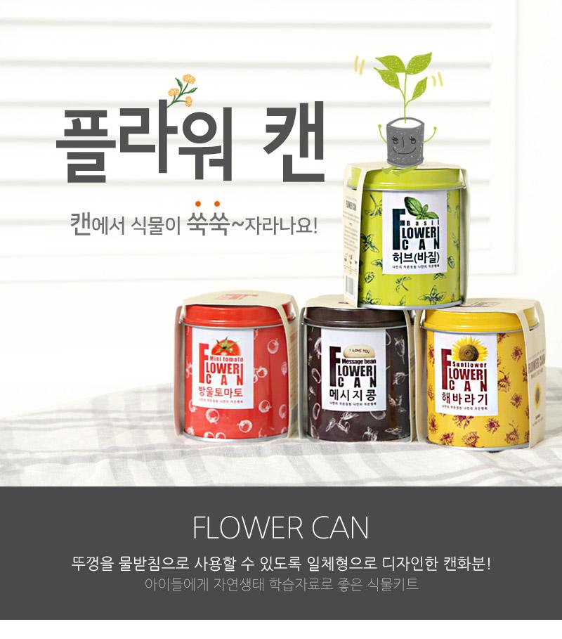 new) 플라워캔_메시지콩 - 꿈쟁이플라워캔, 6,000원, 새싹/모종키우기, 새싹 키우기