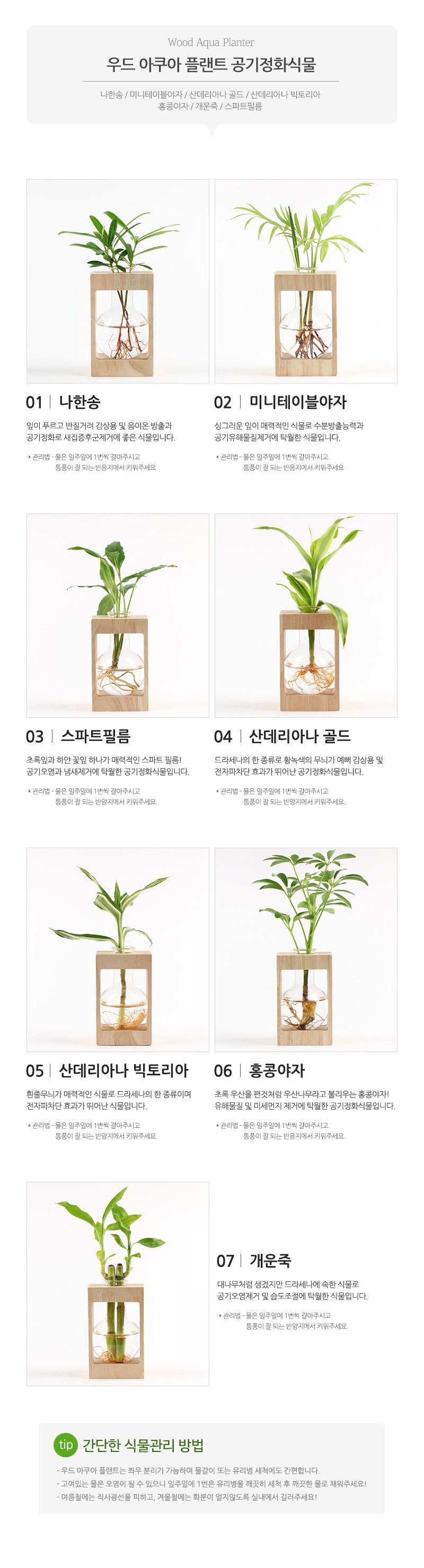 우드 아쿠아 플랜트 M - 꿈쟁이플라워캔, 15,000원, 허브/다육/선인장, 수경식물/에어플란트