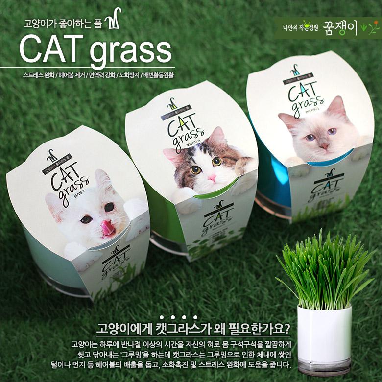 원형화분 캣글라스 - 고양이가 좋아하는 풀 - 꿈쟁이플라워캔, 7,000원, 간식/캣닢, 캣닢