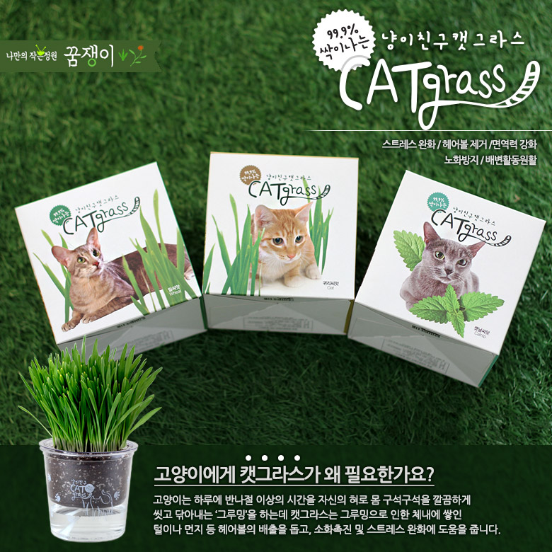 투명화분 냥이친구 캣그라스3,500원-꿈쟁이플라워캔펫샵, 고양이용품, 간식/캣닢, 캣닢바보사랑투명화분 냥이친구 캣그라스3,500원-꿈쟁이플라워캔펫샵, 고양이용품, 간식/캣닢, 캣닢바보사랑