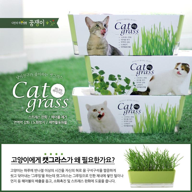 냥이친구 투톤 캣그라스10,000원-꿈쟁이플라워캔펫샵, 고양이용품, 간식/캣닢, 캣닢바보사랑냥이친구 투톤 캣그라스10,000원-꿈쟁이플라워캔펫샵, 고양이용품, 간식/캣닢, 캣닢바보사랑