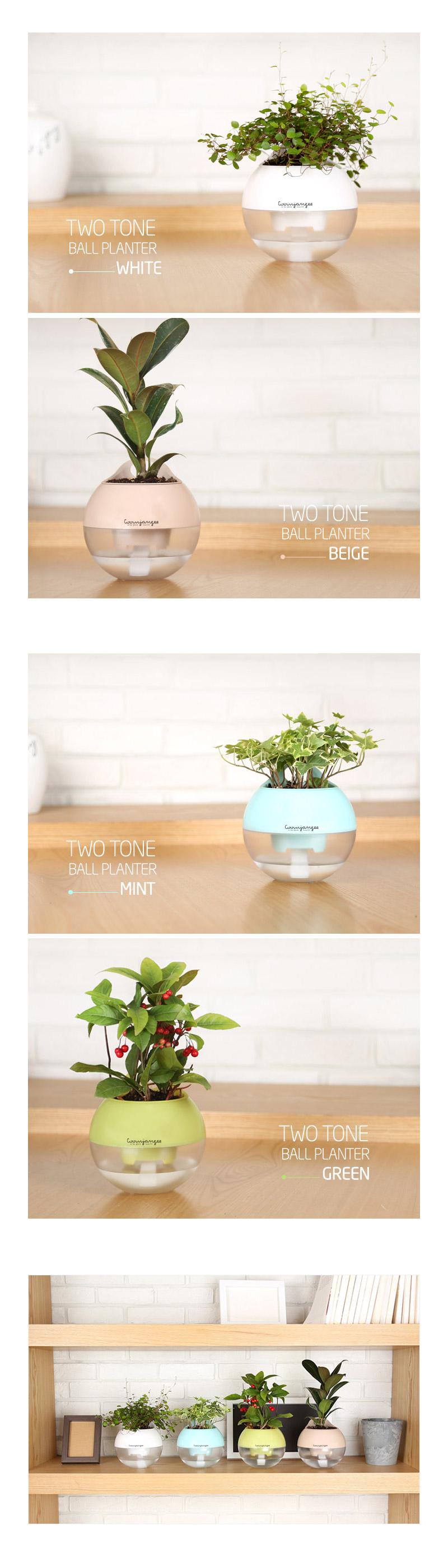 투톤 볼 플랜터 10cm - 분갈이/식물심기용 화분 - 꿈쟁이플라워캔, 5,000원, 공화분, 미니화분