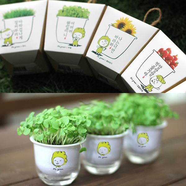 170601FXRCJ-0870 집에서 식물키우기 책상 미니화분 방울토마토