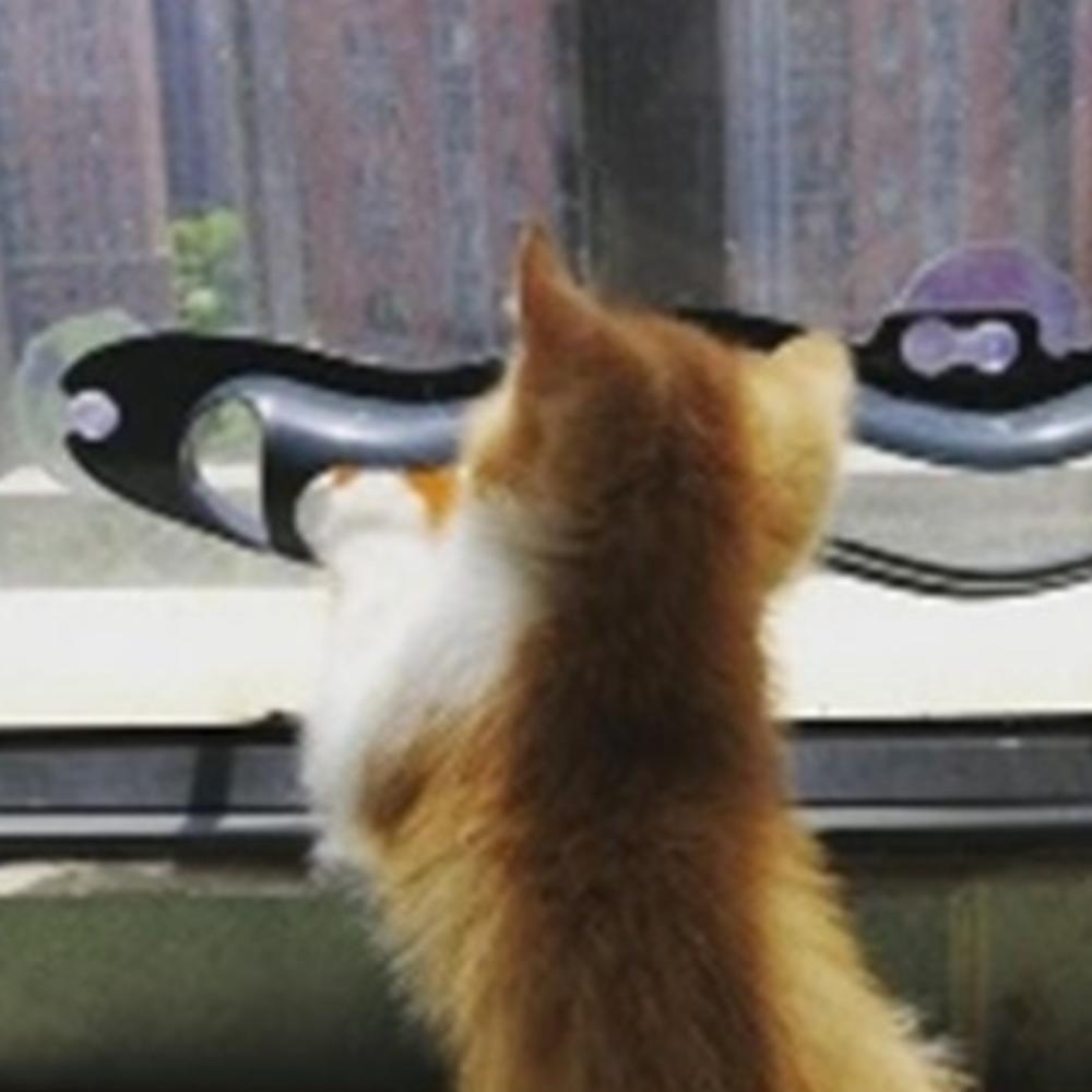 고양이 트랙앤롤 물결 공 유리 타일 레일 흡착판 장난감