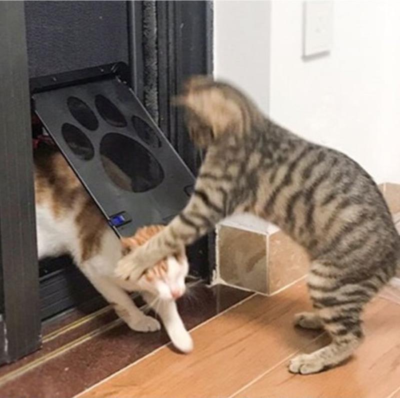 강아지 고양이 베란다 방문 스크린 방충망 도어 출입문 안전문 외부 24x29cm 출입구