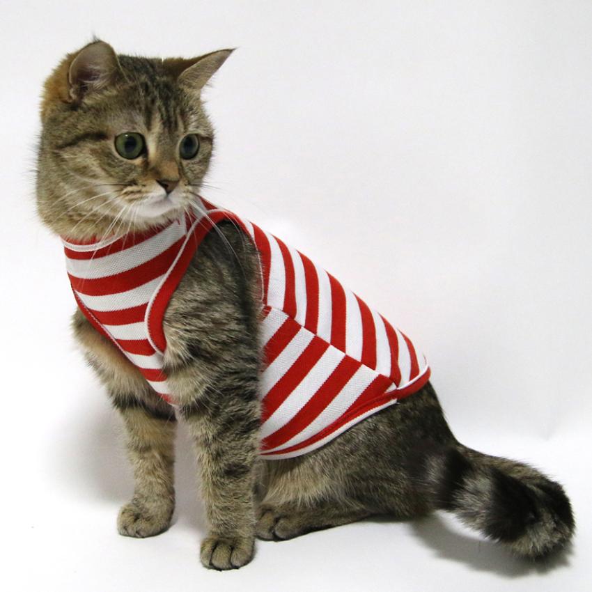 고양이 레드 실내복 티 옷 의류 민소매 활동성 신축성 캣 M L XL 티셔츠