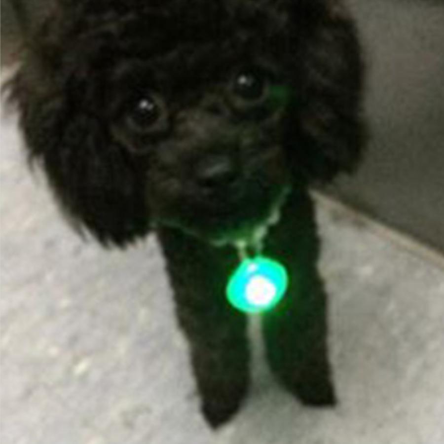 강아지 밤 야간 안전 산책 외출 LED 야광 발광 펜던트 미아방지 목걸이 색상랜덤