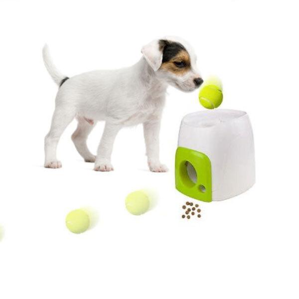 강아지 애견 무전원 훈련 공 놀이 간식보상 장난감