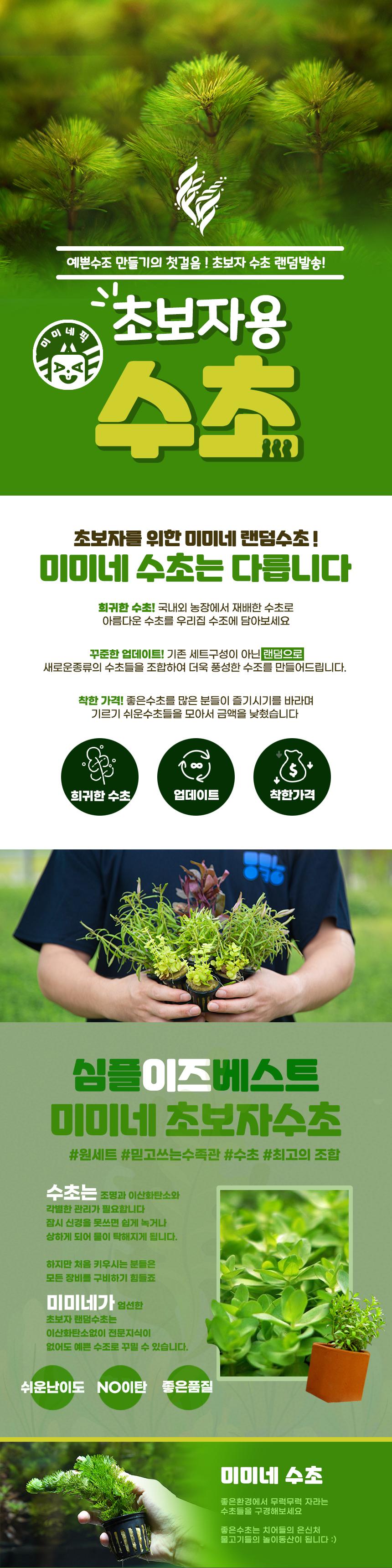초보자용 랜덤수초 초보수초 세트 - 25촉내외 - 미미네아쿠아, 9,000원, 장식품, 수초