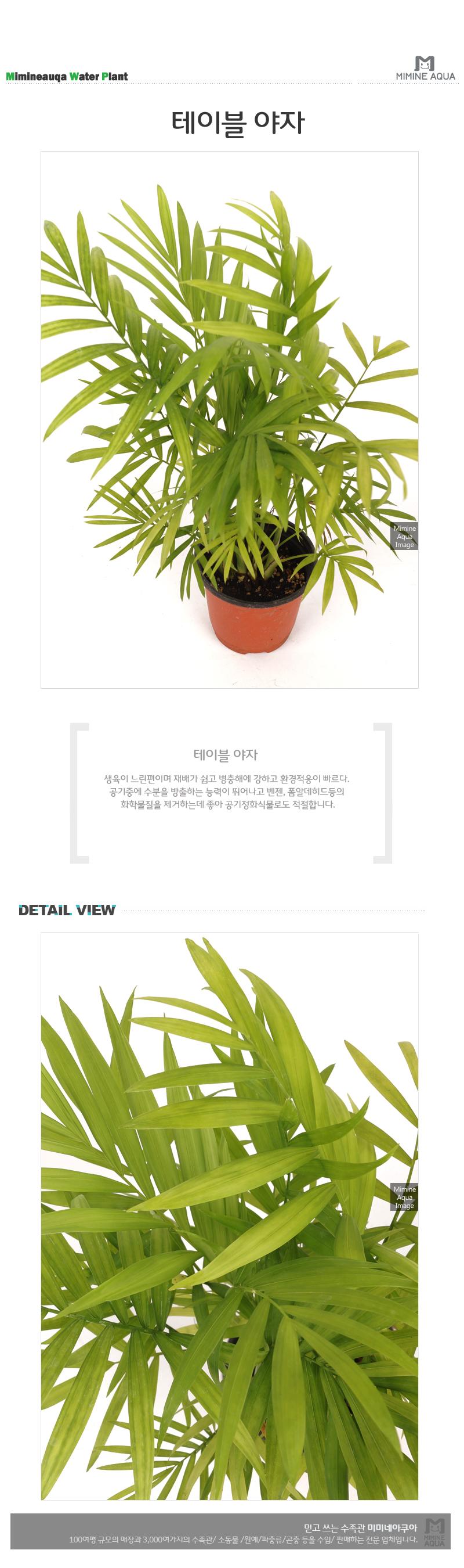 테이블 야자 1포트 - 미미네아쿠아, 3,000원, 허브/다육/선인장, 공기정화식물