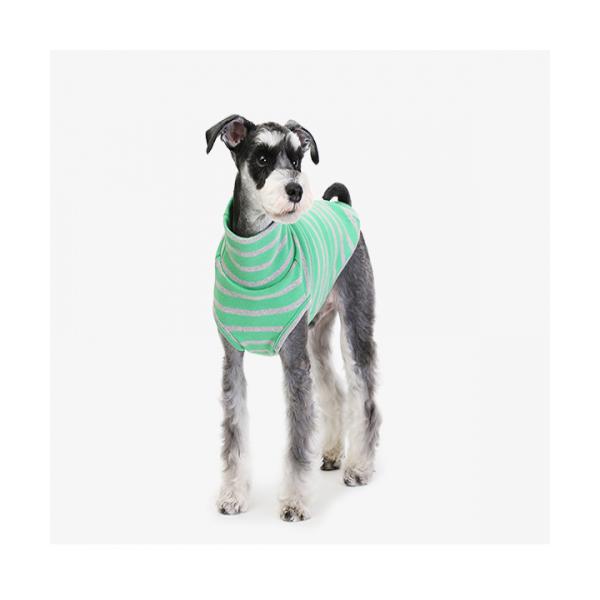 굿스트라이프 터틀넥 그린 애견의류 강아지옷