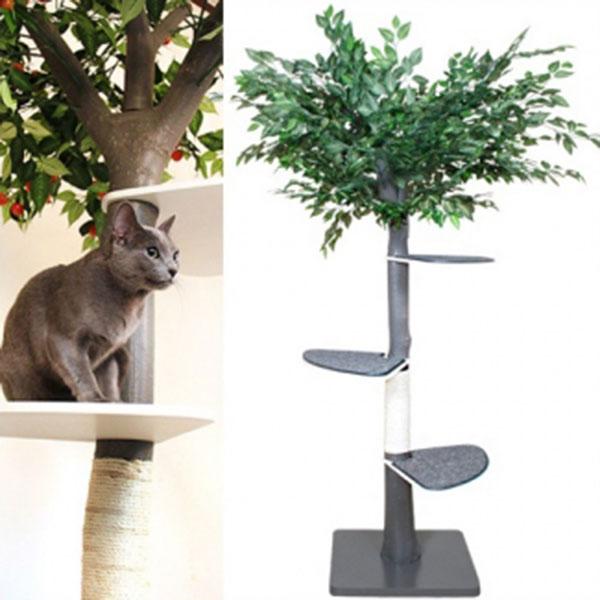 펫모닝 숲속의 고양이 벵갈러버 캣트리