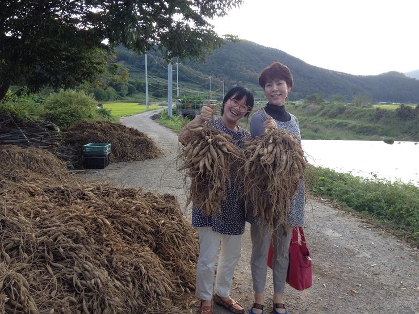 한 뿌리가 8kg가 넘는 천문동을 들고 웃고있는 대표님 사진 (전남 화순 아산농원)