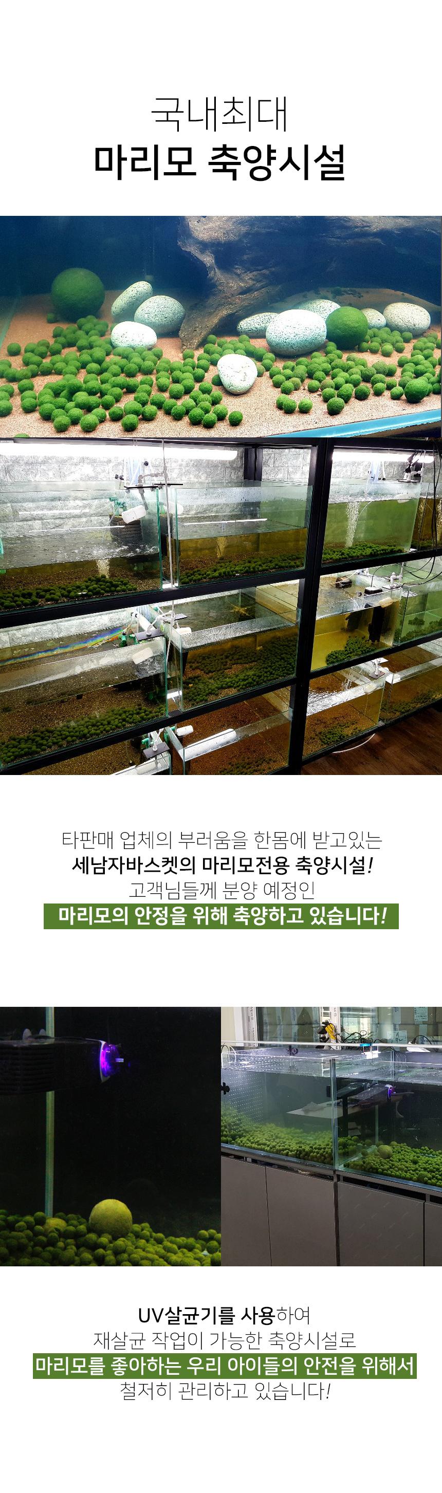 세남자바스켓 마리모 영양제 마리모밥 25ml - 세남자바스켓, 3,000원, 키우기, 식물