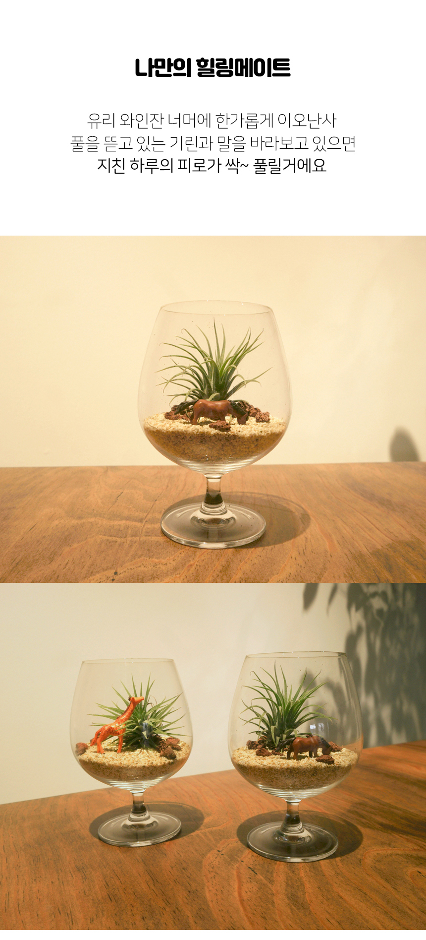 와인잔 이오난사 미니사막 DIY 세트 공기정화 먼지먹는 식물 - 세남자바스켓, 8,900원, 허브/다육/선인장, 공기정화식물