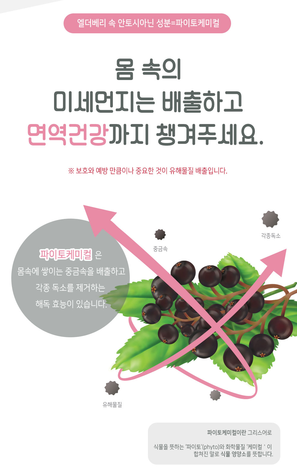 elderberry_07.jpg